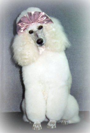 Home stelters professional pet grooming we offer state of the art dog grooming facilities with professional grooming stylists this is a family owned business with over 35 years of quality solutioingenieria Image collections